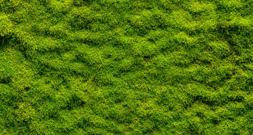 City Tree el musgo que absorve polución
