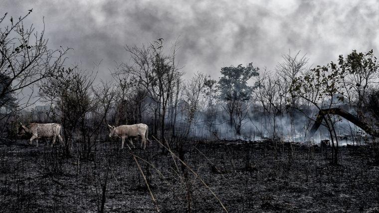 Cómo perjudican los incendios forestales al medio ambiente